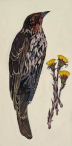Cuckoo with Coltsfoot