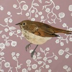 Wren with Floral Pattern